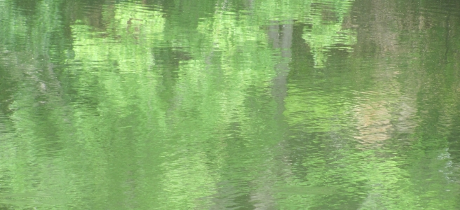 Green leaves reflected on the rippling surface of a lake.